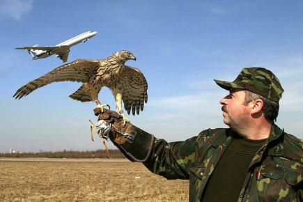 Хищные птицы и самолёт