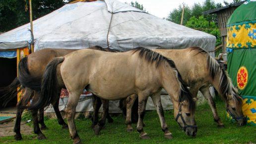 Татарские лошади