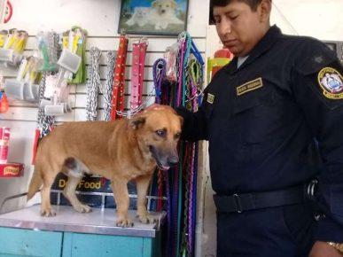 Полицейский пёс Чато