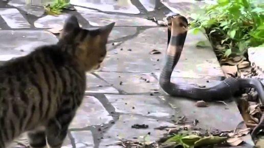 Кошка и кобра
