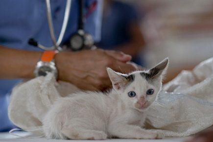Котёнок у ветеринара