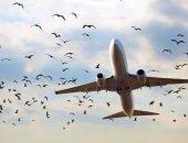 самолёт и птицы