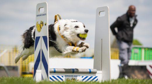 Собака-спортсмен
