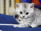 Кошка даёт лапу