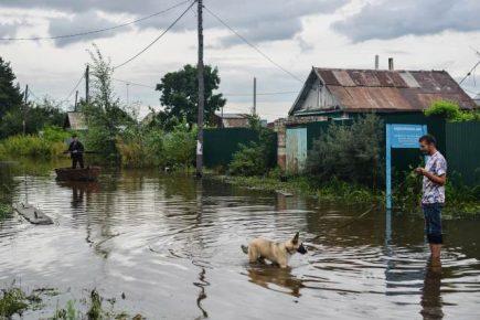 Собаки в затопленном микрорайоне