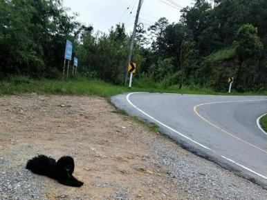 Пёс у дороги