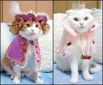 Переодетые кошки