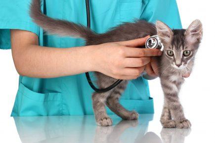 Котёнок на приёме у ветеринара