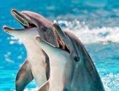 дельфины афалины