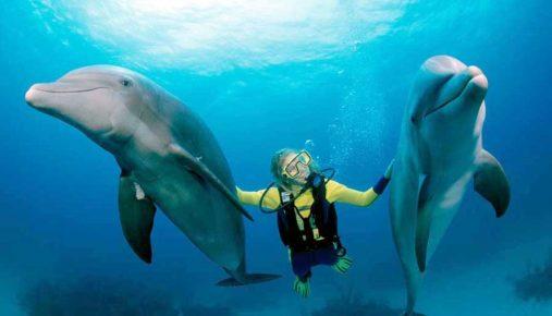 человек и дельфины