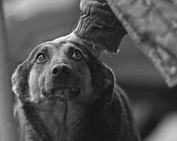 Собаку глядят по голове