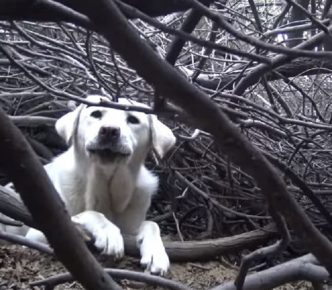 Собака в куче веток