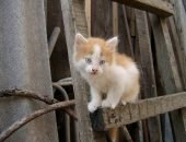 Рыже-белый котёнок