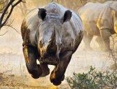 злой носорог