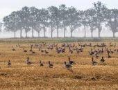 птицы на поле
