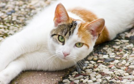 Кошка на гравии