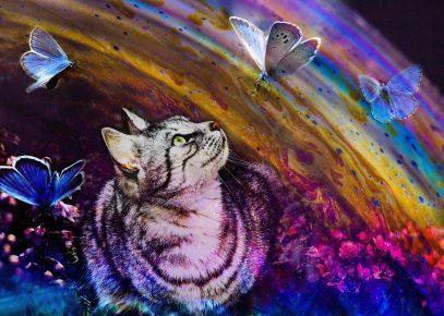 Кот, бабочки и разуда