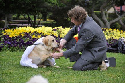Брак между человеком и собакой