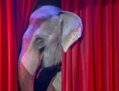 Слон на арене