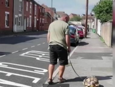 С черепахой на поводке