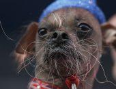 Победитель конкурса уродливых собак