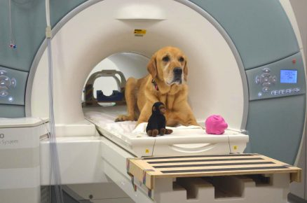 МРТ-обследование собаки