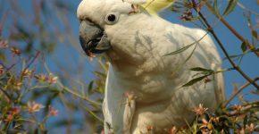 белый попугай танцует
