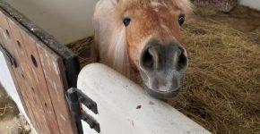 Пони в стойле