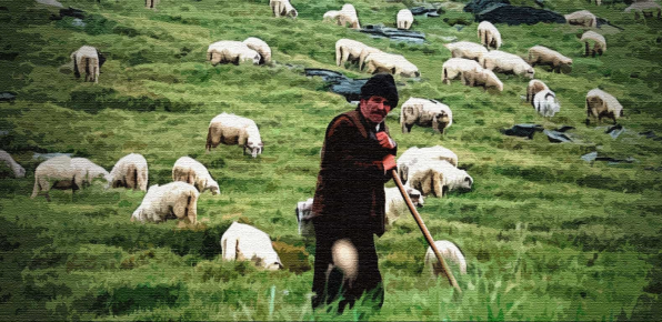 Пастух пасёт отару