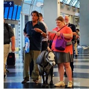 Пони в аэропорту