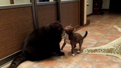Кот и пёс