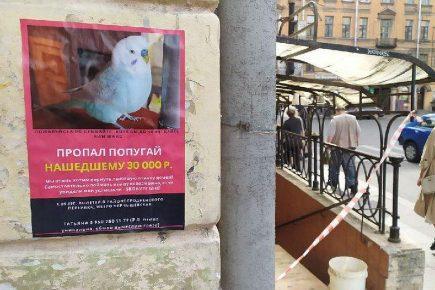 Коллаж: объявление и место пропажи птицы