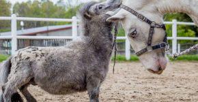 Конь Бомбель