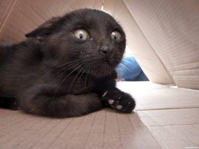 Испуганный чёрный кот