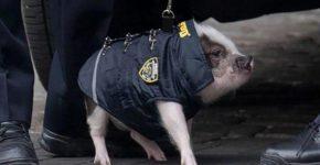 Свинка в полицейской форме