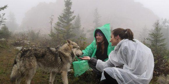 Туристки и собака