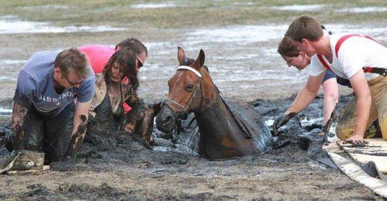 Спасатели вытаскивают коня из трясины