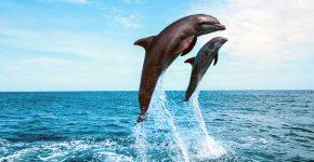 дельфин и дельфинёнок