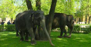Слоны на улице