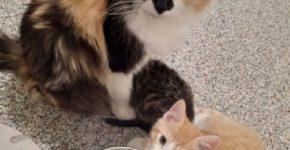 Тюльпанчик и её котята