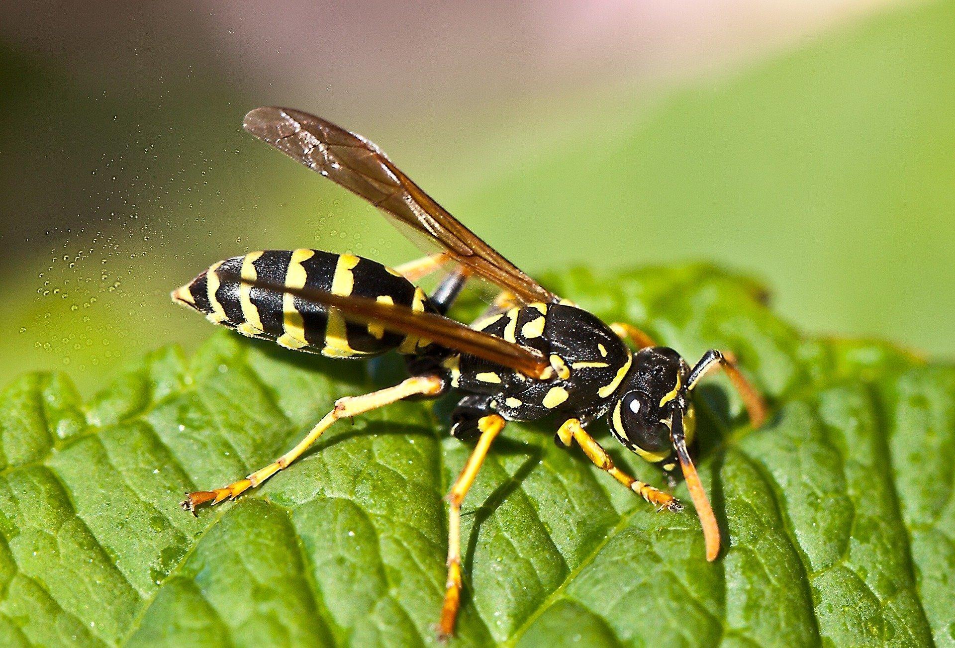 картинки осы и все о ней собрали