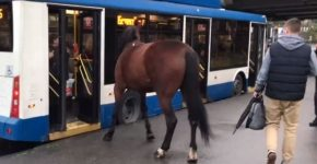 Лошадь и троллейбус