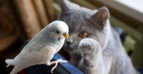 кот раздражает попугая