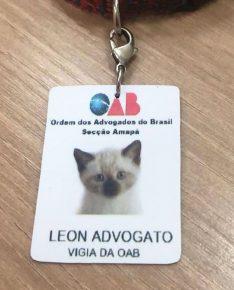 Удостоверение кота-адвоката