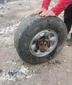 Пёс в колесе