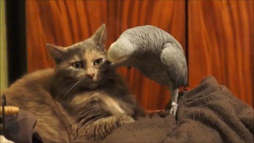 Попугай заглядывает в глаза коту