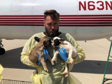 Спасение щенков