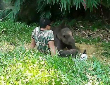 Слонёнок с человеком