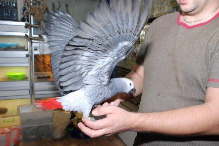 Попугай с хозяином