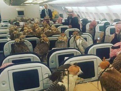 Соколы в салоне самолёта
